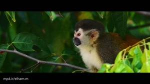 نمای زیبای دیگری از کاستاریکا ۴k