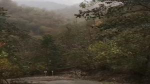 نمایی از طبیعت زیبای پاییز در جاده