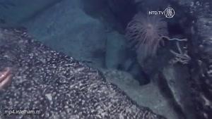 کشف احتمالی قاره ی گمشده در اقیانوس اطلس توسط محققانِ ژاپن