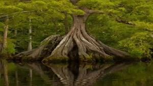 درختان بسیار زیبا که شاید هرگز ندیده باشین😳😳👍