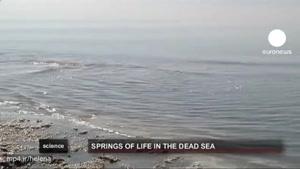 کشف زندگی در دریای مرده