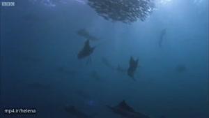 زندگی هیجان انگیز ماهی که خودش ماهیگیر است !