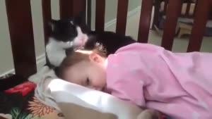 دختر کوچولو و گربه ی مهربون !