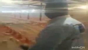 وضعیت مرغداریها در پی اعتصاب کامیونداران...🤦♂