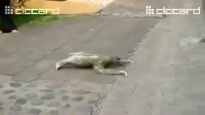 کمک به حیواناتی که آهسته حرکت میکنند.