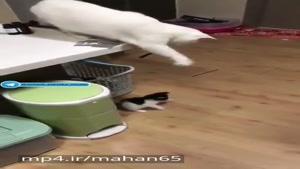 گربه ها حقه های آدما یاد گرفتن 😂