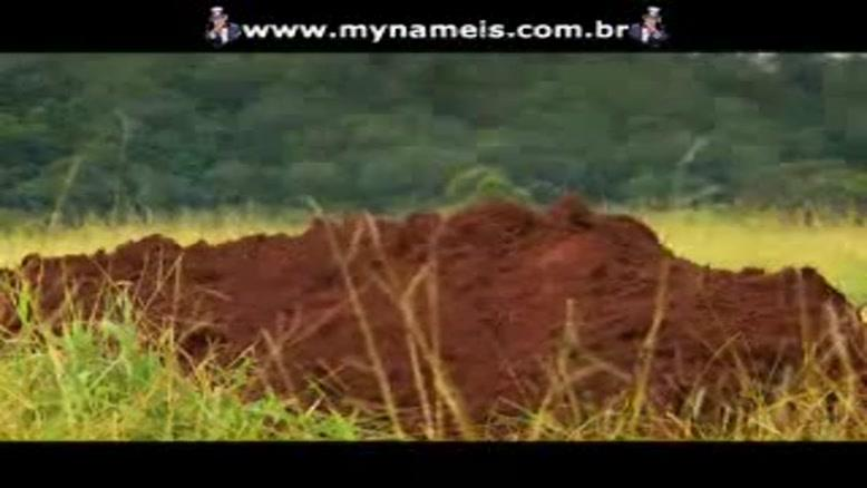 کلونی مورچه ها