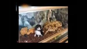صحنه غم انگیز از خرگوش