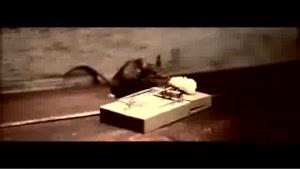 موش ورزشکار