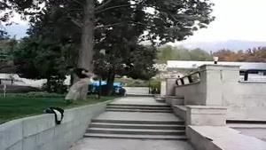 پارکور برزین و سامان
