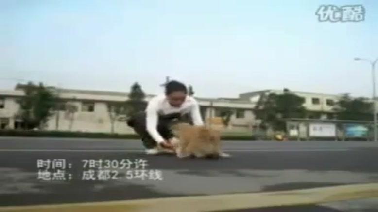 محبت بین حیوانات