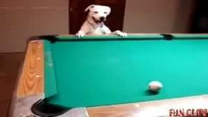 سگها هم بيليارد بازي ميکنند
