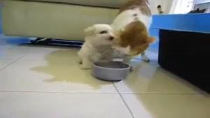 بی رحمی گربه نسبت به سگ