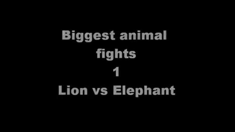 حمله فیل به شیرها