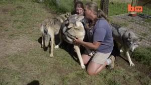 زندگی یک مرد با گرگها