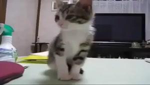 گربه خابالو