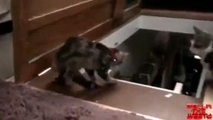 گربه مردم آزار باحال