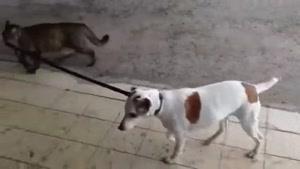 وقتی گربه صاحب سگ میشه..