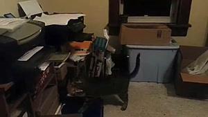 گربه فضول...