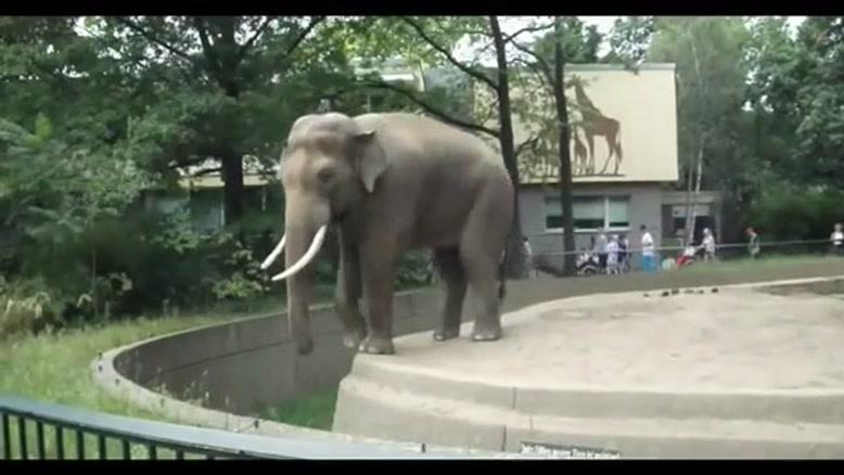 فیل بی ادب