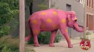 فیل سحرآمیز