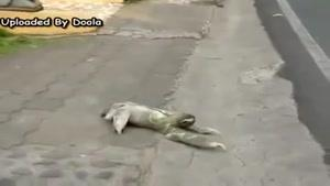 حیوان عجیب غریب در خیابان