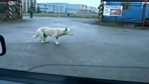 تکنو زدن سگ