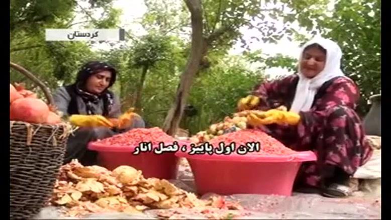 گزارش جالب از برداشت انار در اورامان - کردستان