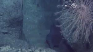 کشف احتمالی قاره ی گمشده در اقیانوس اطلس