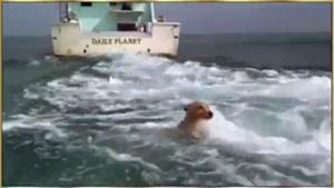 نجات سگ توسط دلفین