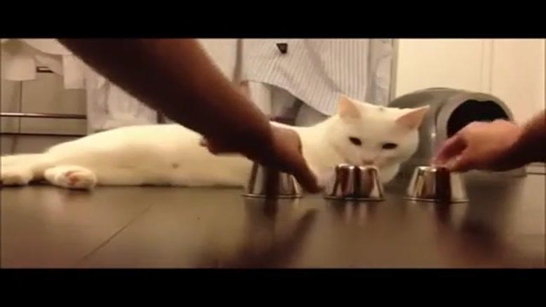 گربه از این باهوش تر نیست