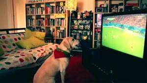 سگی که فوتبال میبینه و تشویق میکنه