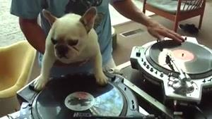 سگ دی جی!!