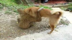 دوستی و بازی میمون با سگ