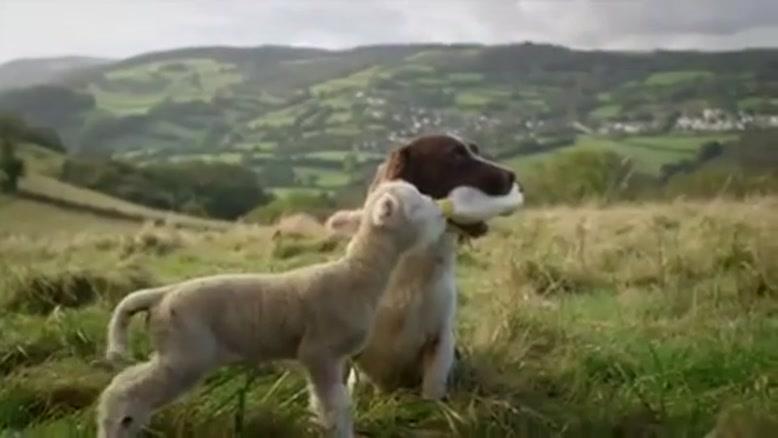 محبت سگ