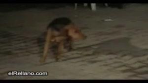 رقص جالب سگ در عروسی