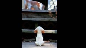 حیوانات زیبا