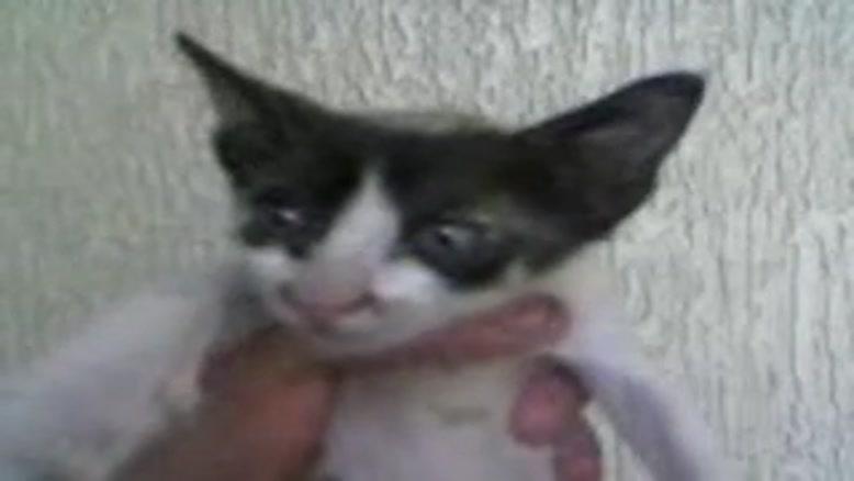 فشردن گربه
