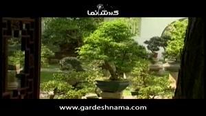 راهنمای گردشگری سنگاپور ۳-باغ بنسای و گیاهان ژاپنی