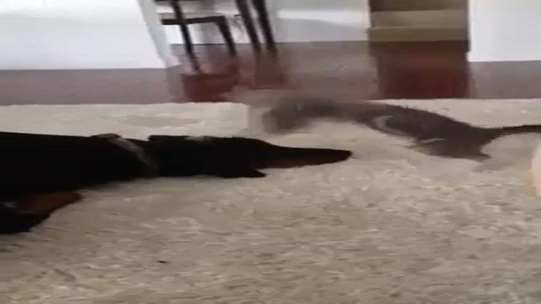 گربه اذیت کن