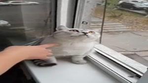 گربه است یا جغد ؟؟؟