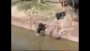 میمون ها و کارهای جالب و خنده دارشون