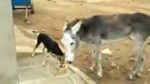 سگ پررو و خر بی اعصاب - آخر خنده