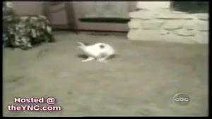 حرکات جالب و خنده دار حیوانات