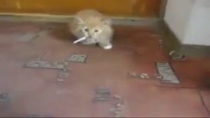 گربه معتاد