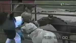 حمله جانوران و حیوانات