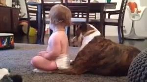 لیسیدن بچه توسط سگ