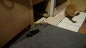 گربه ی خاک بر سر