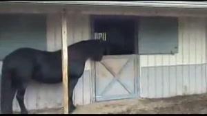 باهوش ترین اسب دنیا