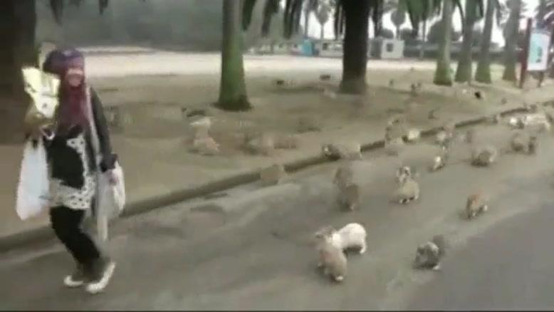 پارک خرگوش ها